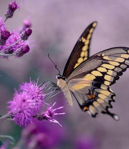 De Natuurlijke Essentie - Priscilla Tielman